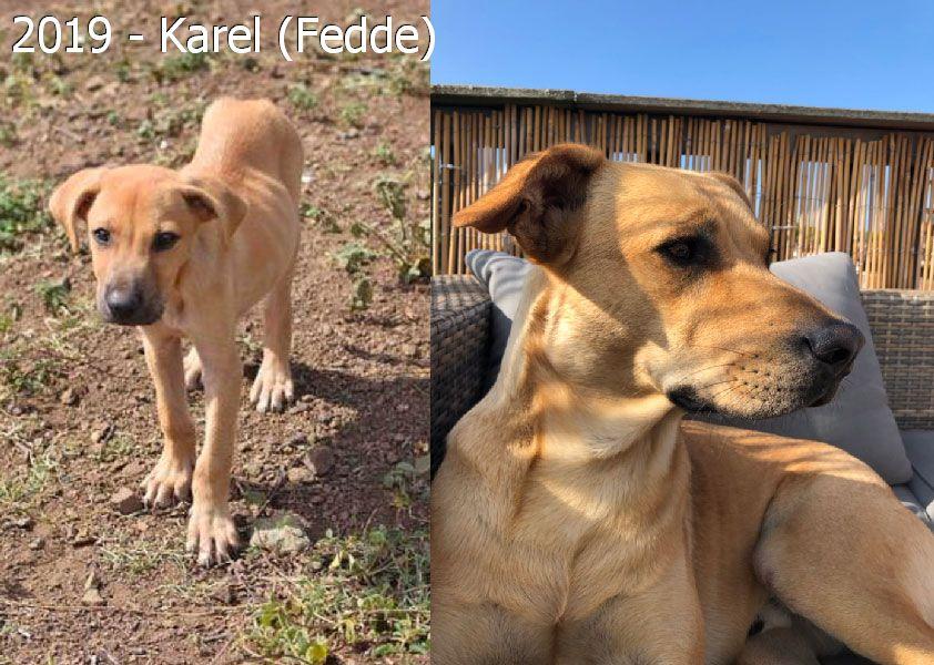 2019 – Karel (Fedde)