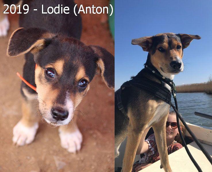 2019 – Lodie (Anton)
